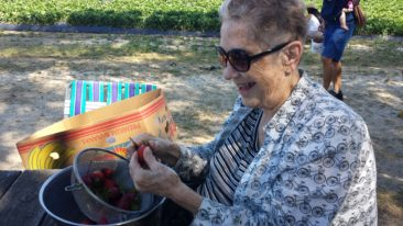 Norskevenner lodge member Sonja Siders busy preparing strawberries after picking them in the fields for their Strawberry Festival